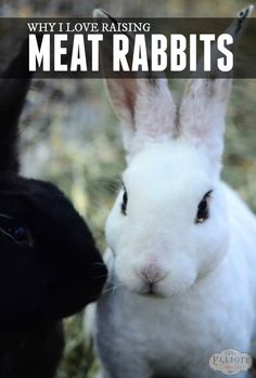 Here at the Elliott Homestead, we have a rabbitry. Here's a few of the many reasons why I love raising rabbits for meat. It's a great animal for a farm! Raising Rabbits For Meat, Raising Farm Animals, Meat Rabbits Breeds, Backyard Farming, Chickens Backyard, Rabbit Farm, Rabbit Cages, Pet Rabbit, Rabbit Hutches