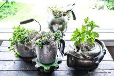 kettle herb garden