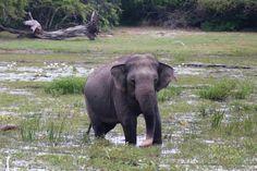 Kumana National Park: Seeing Elephants on Safari with EcoWave Travels
