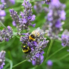 2 Ways to Avoid Pesticides & Commercial Fertilizer Forever