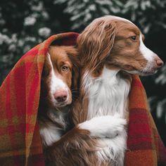Guide de 340+ pages pour apprendre à dresser son chien facilement et rapidement. Eduquer son chien en 15 minutes par jour. chien méchant apprentissage canin Two Dogs, I Love Dogs, Cute Dogs, Dressage, Dog Grooming Clippers, Dog Wrap, Lovely Creatures, Dog Photography, Happy Dogs