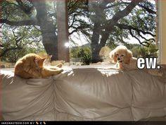 haha...too funny :)