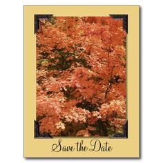 ==>Discount          	Orange Leaves Save the Date Postcard           	Orange Leaves Save the Date Postcard so please read the important details before your purchasing anyway here is the best buyDiscount Deals          	Orange Leaves Save the Date Postcard today easy to Shops & Purchase Online ...Cleck Hot Deals >>> http://www.zazzle.com/orange_leaves_save_the_date_postcard-239242270818530009?rf=238627982471231924&zbar=1&tc=terrest