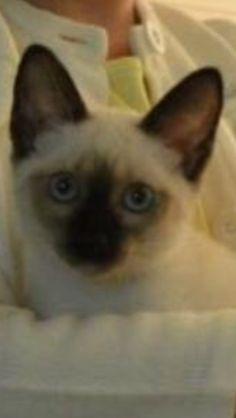 My kitty(Mimi)