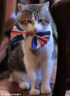 Larry is:Chief Mouser to the Cabinet Office of the United Kingdom of Great Britain and Northern Ireland at 10 Downing Street.Only two cats, Humphrey & Larry,have been given the title officially;other cats were given this title affectionately.There's  been a resident Downing Street cat employed as mouser since the reign of Henry VIII.The cats are viewed as civil servants,they do not belong to the Prime Minister & it's rare for the Chief Mouser's office term to coincide with the Prime…