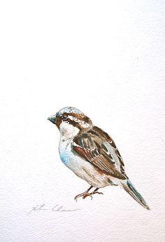 Sparrow Study #3 by Kristina Closs