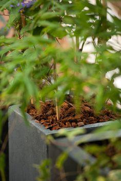 Le paillis - botanic® Gardens, Mulches, Interview, Plant, Colors
