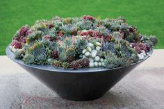 Hens and Chicks (Sempervivum), packed into a low bowl, make for a wonderfully textured patio or tabletop display that will last for years. If it gets overcrowded, just snip off the chicks, or offsets, and pot them up. These succulents are cold hardy, so they can generally winter over outside, though in very harsh climates, they may benefit from some added protection.