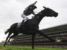 Wonderfilly Treve wins Horse of the Year with Black Caviar
