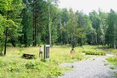 Koptyaki forest memorials in 2007.