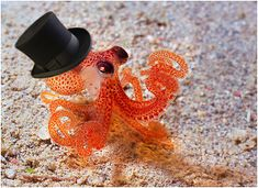 tophat!