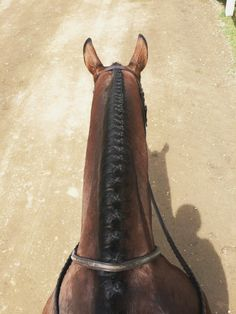 there are few things I love as much as a well-braided mane.