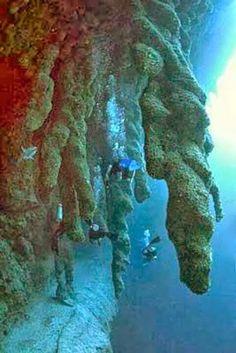 Blue Hole Diving, Belize www.tortugamusicfestival.com // #tortugafest