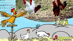 Il risveglio degli animali. Basato sul Carnevale degli animali dI Saint ...