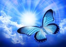 Love Butterfly Graffiti Care Psychology - Download From Over 46 Million High Quality Stock Photos, Images, Vectors. Sign up for FREE today. Image: 34762426