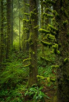 Stepping Through by Scotty Perkins ~ forest of Ecola State Park on the Oregon Coast.**