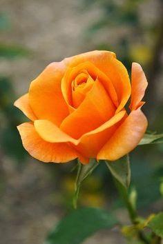 ~Rose Remy Martin~