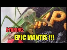 Caught Riding Dirty On The Homestead !!! Manic Mantis Has OCD - Obsessive Cleaning Disorder !!! #Homestead #prepper #survivalist #offgrid #lifestyle #health #style