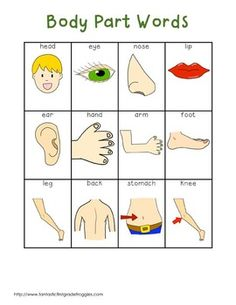 WRITING CENTER TOOLS- BODY PART WORDS - TeachersPayTeachers.com