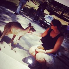 #currumbinwildlifesanctuary #currumbin #Oz #australia #wildlifesanctuary #kangaroo #cute #animal #contiki #tours #travel #wanderlust #escape #backpacking #tb #rtw #roundtheworld #10years ago today by curious_clare http://ift.tt/1X9mXhV