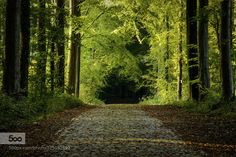Forest Path Hallerbos Belgium Forest path covered with the first signs of the fall Hallerbos (Halle Forest) Belgium.