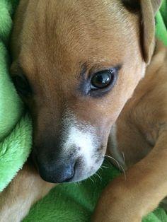 Mr Puppy ❤️