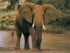 Elephants   Elephants   Adeeyoyo's Blog