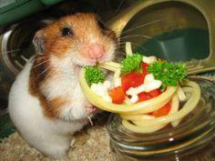 spagetti and ham