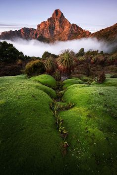 A mossy viewing spot for Mt Anne. South-West National Park, Tasmania, Australia.