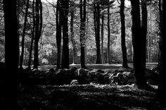 A picnic area at Housatonic Meadows State Park on an early fall day. The light was magical. Much better detail in Lightbox (press 'L').  Color version. Explored July 8, 2015 more In Explore more Black and White more Vistas more Best Shots Pentax K-3 - SMC Pentax DA 55-300mm F4-5.8ED (IMG35611ec1b) https://www.picturedashboard.com