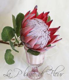 Risultati immagini per Pincushion protea flower illustration Protea Art, Protea Flower, Arrangements Ikebana, Silk Flower Arrangements, Diy Wedding, Wedding Flowers, Protea Wedding, Wedding Bouquets, King Protea