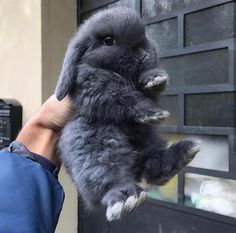 Image about love in furry friends ❤️ by im stephanie heyyy :) Mini Lop Bunnies, Cute Baby Bunnies, Cute Cats, Coelho Mini Lop, Animals And Pets, Funny Animals, Cute Little Animals, Pet Rabbit, Cute Creatures
