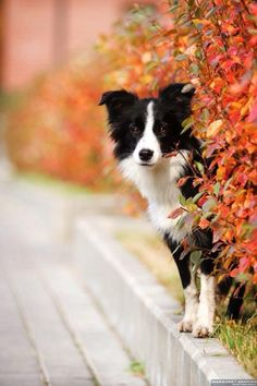 How this dog Looks at the photographer awwwwwwwwwwww
