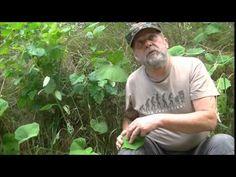 Naturalne leki - YouTube Natural Remedies, Survival, Nature, Youtube, Mens Tops, T Shirt, Supreme T Shirt, Naturaleza, Tee Shirt