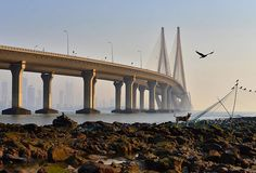 Bandra - Worli Sea Link in Mumbai. It's a famous cable-stayed bride connecting West Mumbai to South Mumbai.  An eagle flies over a dog and some birds are sitting on the fishing nets that the locals use to cut fish off during the high / low tide. All of the animals were watching the fisherman hoping to score a free feed.  Under the bride you can see South Mumbai, through the haze of pollution that is. Mumbai is a city that burns my eyes from the level of pollution. I did see a lot of…