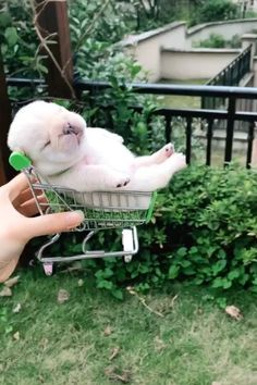A trolley bulldog dog . A trolley of bulldog ? A trolley of bulldog ? Cute Funny Dogs, Cute Funny Animals, Gato Gif, Dog List, Cute Dogs And Puppies, Adorable Puppies, Baby Puppies, Doggies, Cute Animal Videos