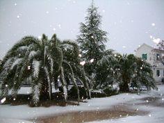 nieva sobre las palmeras