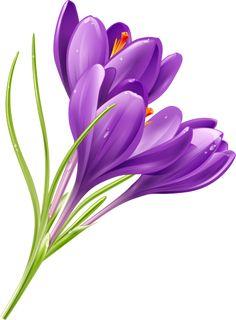 Crocus flower print by Don Tiffney | Purple | Saffron ...