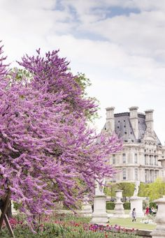 Blossoms in The Tuilieries, Paris