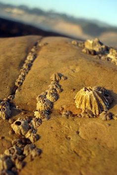 Beaches Photography - Beach Photography