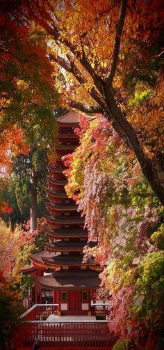 Autumn in Nara, Japan