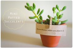 DIY Plant Wedding Favors | favorssucculents.png