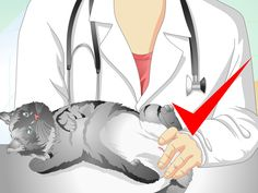 Spay and neuter surgeries are routine operations, but they're still surgeries. If you're worried about how to care for your cat after it's been spayed (female cats) or neutered (male cats), you've come to the right place. There are several...