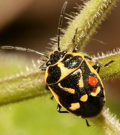 """Bugs of Russia  Not only does this article have a good collection of the """"Anthropods of Russia"""" photographs, but also goes into wonderful detail about the insects and their related species from other continents. I will be exploring this blog later for sure."""