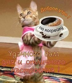 Good Morning Beautiful Gif, Emoji, Good Afternoon, Cute Cats, Psychology, Dog Cat, Animals, Cute Kittens, Love Pictures