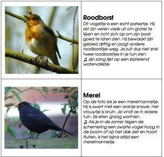 Montessoriwerkje vogels