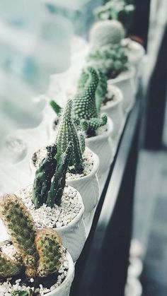 iPhone and Android Wallpapers: Cactus Wallpaper for iPhone and Android - Cacti & Succulents - Plants Indoor Cactus Plants, Cactus House Plants, Cactus Pot, Cactus Flower, Tropical Plants, Potted Plants, Tropical Garden, Catus Plants, Hoya Plants