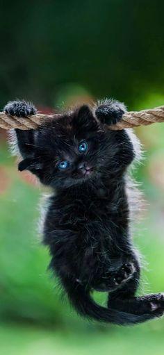 Kittens Cutest, Cats And Kittens, Kitten Wallpaper, Kitten Love, Love Bugs, Puppy Pictures, Galaxy Wallpaper, Panther, Batman