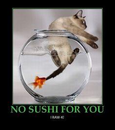 Google Image Result for http://www.e-forwards.com/wp-content/uploads/2010/12/sushi-funny-poster.jpeg