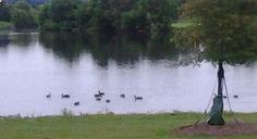 Ducks Huntsville